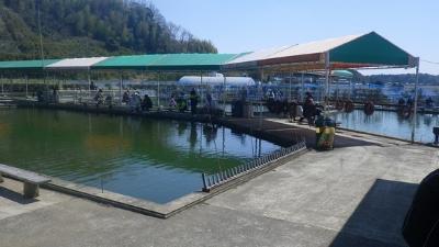 錦鯉釣り場